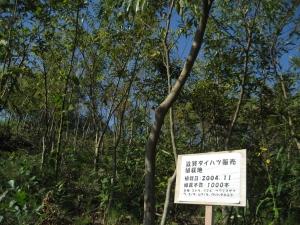 滋賀ダイハツが初めて植樹に取り組んだ 2004年11月に植えた苗木たちです。立派に成長し、こんなに生い茂っています!
