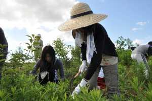 女性も虫に恐れながら必死に草刈りしています。